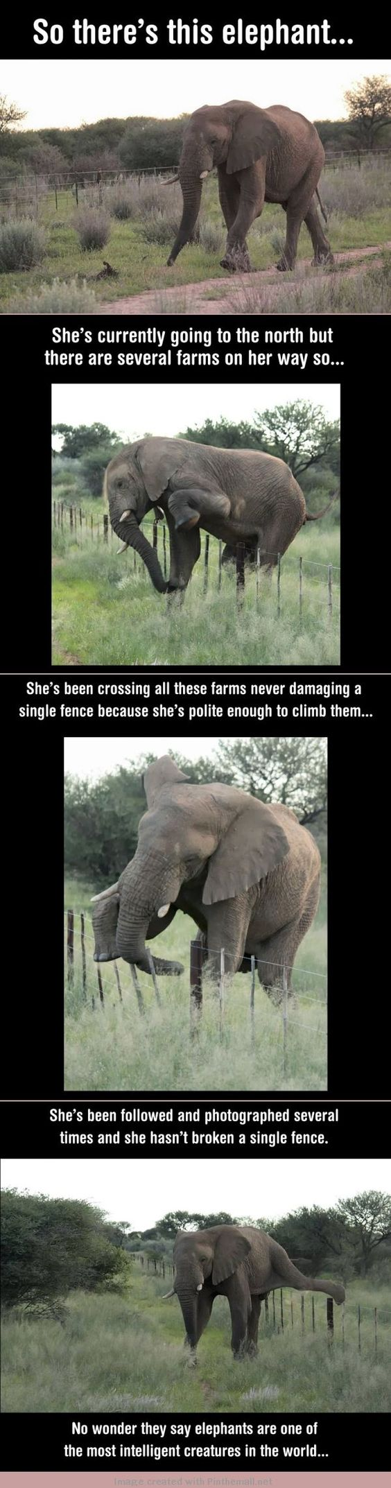 This polite elephant made us awww