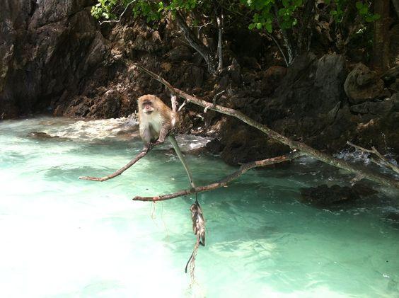 Monkey feeding :) Phi Phi Island Thailand