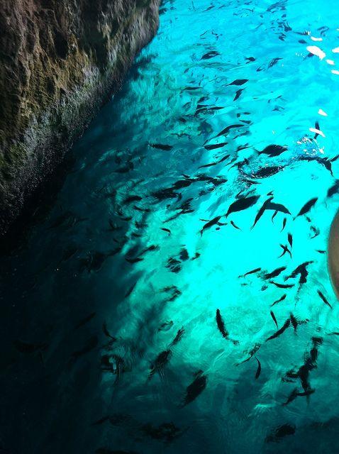 Grotta delle Viole, Isole Tremiti. Il prossimo anno....macchina fotografica subbacquea...subbacqui...su rieducational channel