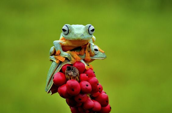 frog by Candra Irawan on 500px