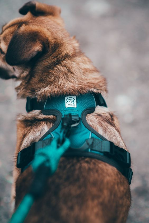 Collar Vs Harness Which Is Best For Your Dog Dog Harness Dog