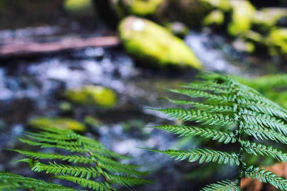 Thirsty Thursday  #australia #surfcoast #greatoceanroad #rainforest #forest #river #water #waterfall #jungle #sun #adventure #explore #wsl #travel #coast #nature #nikon #landscape #thecreatorclass #createexploretakeover #createandexplore #wfc by jvotography