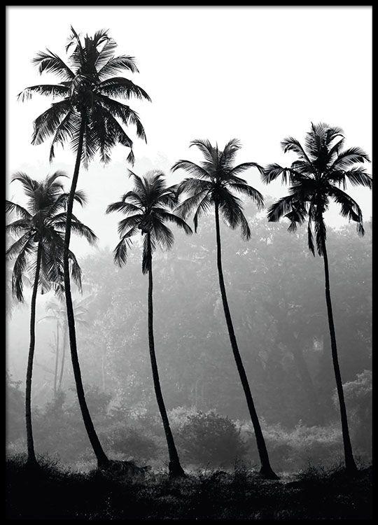 Palm trees, posters in de groep Posters / Afmetingen / 70x100cm bij Desenio AB (8379)