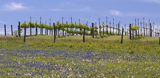 Texas Hill Country discovers its viticulture roots, The Boston Globe, March 11, 2012