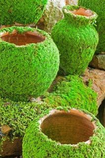 moss growing on pots and stone bench: