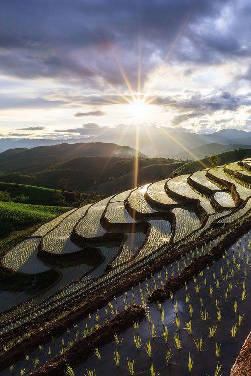 "earthyday: ""Rice terrace © Chan Srithaweeporn """