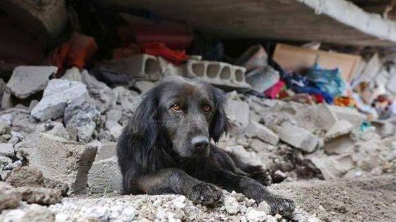 La fotografía del can recostado sobre una pila de escombros frente a lo que habría sido su casa se viralizó en las redes. (Foto: Camilo Cevallos Parra/El Comercio de Ecuador)