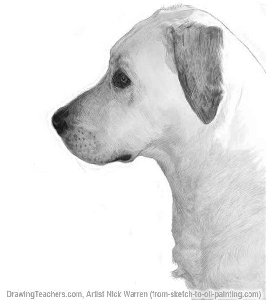 learn how to draw dogs in pencil with this step by step drawing lesson by nick