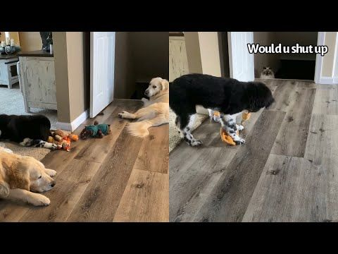 Puppy Annoys Other Dogs Cat With Squeaky Toy Youtube Dogs
