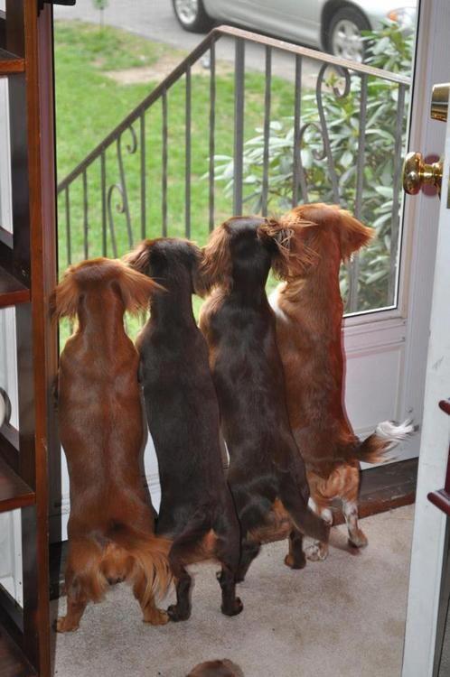 Foto por Brenda Rozzi em O Hotdog Stand Por favor, não remova a fonte.  Obrigado :)