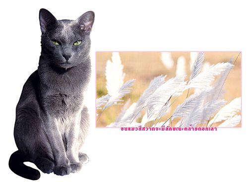 ว ธ การเล ยงแมว ว ธ การเล ยงแมวส สวาด