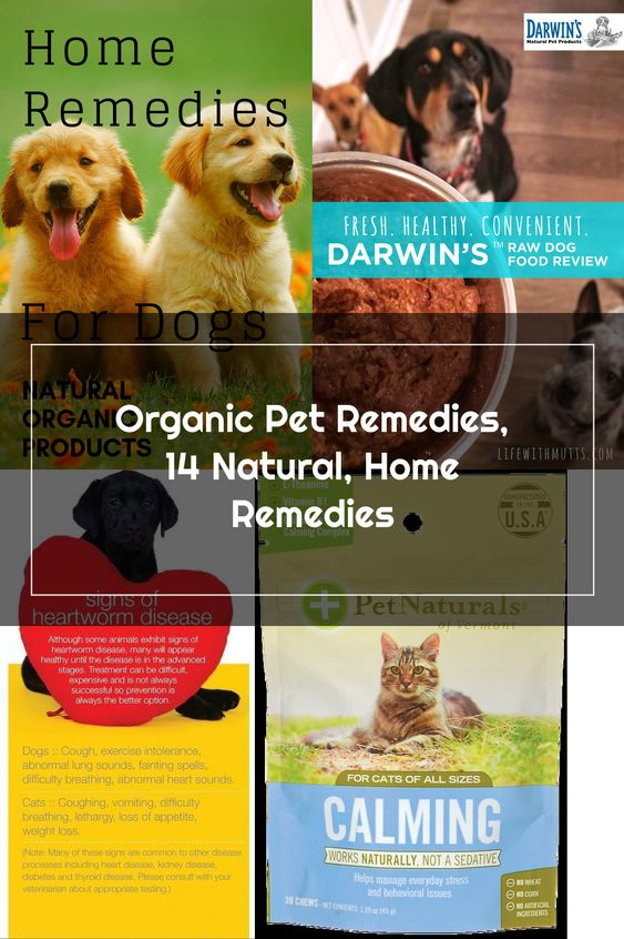 14 Natural Organic Pet Remedies That Actually Work We Usually Recommend That We Take Our Dogs To The Vets When They S In 2020 Pet Remedies Organic Pet Products Pets