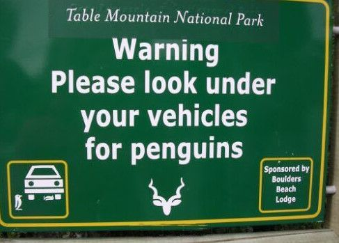 So cute! I would love to find a penguin under my car! #funny #english #signs