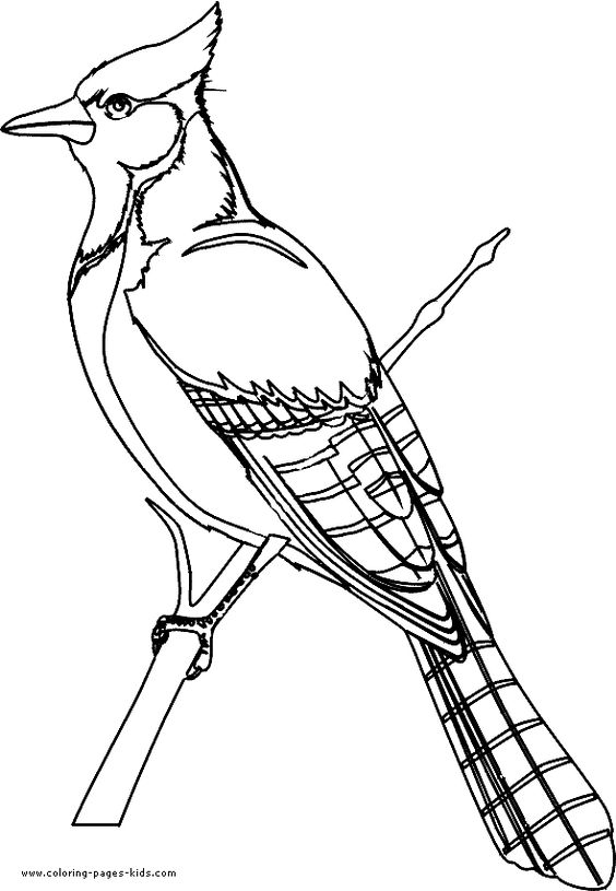 Bird Coloring Plateanimal Coloring Pages Color Plate