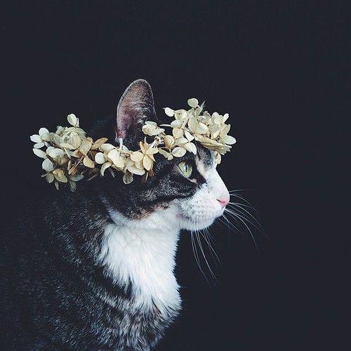 花かんむりの猫