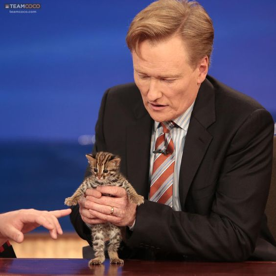 Conan OBrien holding the cutest kitten Ive even seen.