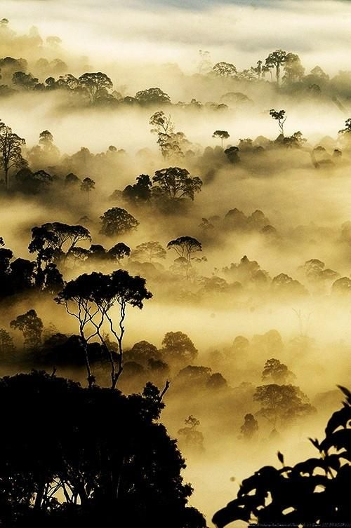 Forest at dusk in the fog.