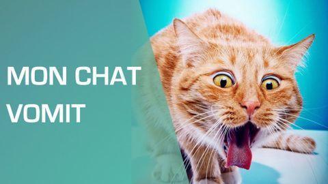 Couper Griffes Chat Comment Couper Les Griffes D Un Chat En 2020 Griffe Chat Chat Chaton Rigolo