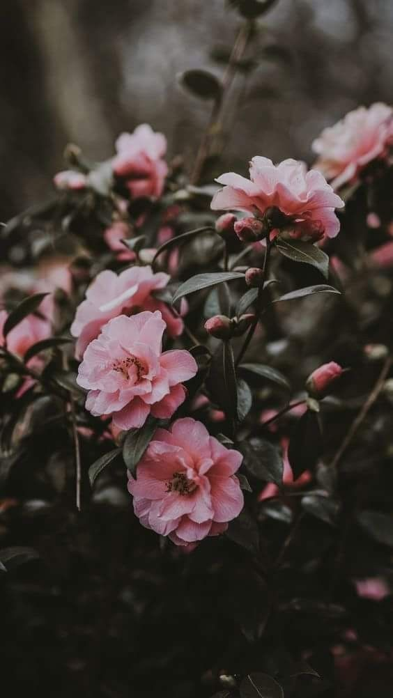 Floral Wallpapers For Iphone And Android Flores Fotografia