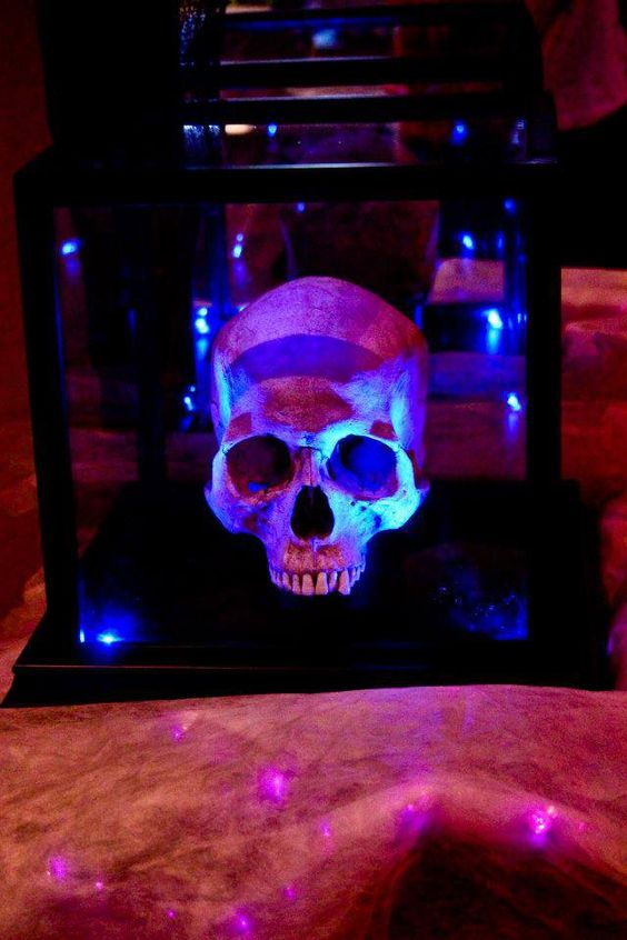 Skull in a plastic  display case with blue led lights