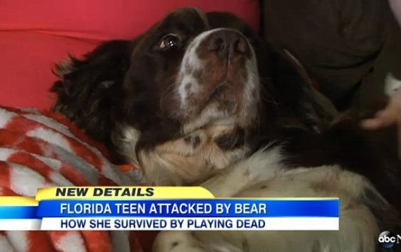 Girl's Dog Chases off Attacking Bear while She Plays Dead