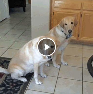 Acho que o reflexo desses cachorros não está muito bom