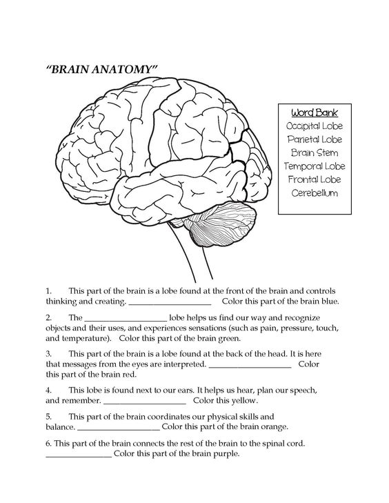 Brain Parts Fill In the Blank & Color Teaching Middle