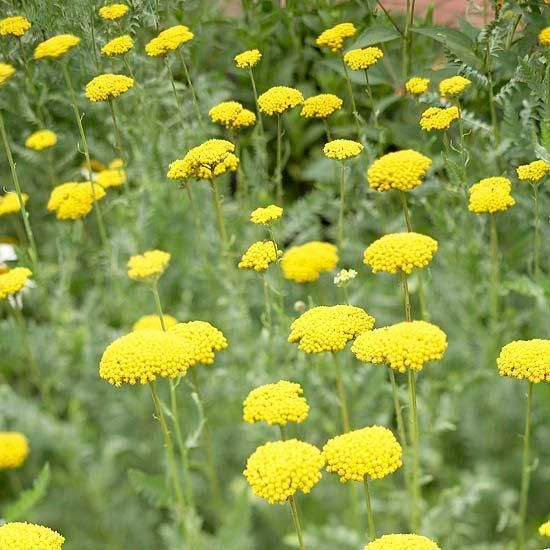 24 Hardy Perennials That Will Add Color To Your Garden Year After Year Best Perennials Plants Flowers Perennials