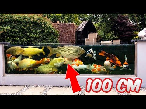 Hello Partners Check Out This Insane Inspiring And Most Beautiful 41 000 Liters Backyard Fish Pond With Glass Use This Video For Your Fish Pond Idea S Taman