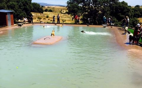 Ya está abierta la primera piscina para perros en Madrid