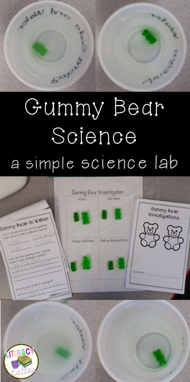 Scientific Method / Gummy Bear Experiment / Science Fair : Some of ...