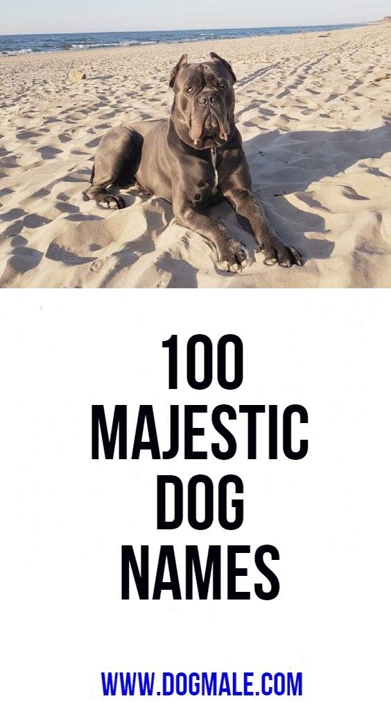 100 Majestic Dog Names Dog Names Big Dog Names Dog Names Unique
