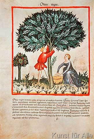 14.+Jahrhundert+-+Hausbuch+d.+Cerruti+/+Schwarze+Oliven