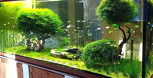Kundenaquarien Aquascaping Shop Fr Naturaquarien In 2020 Aquarium Landscape Aquarium Design Amazing Aquariums