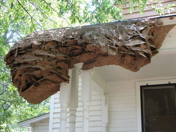 Alabamians, Beware the Wasp 'Super Nest' | Smart News | Smithsonian
