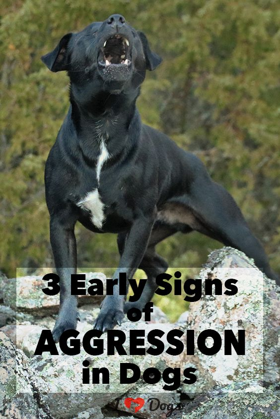 3 Early Signs Of Aggression In Dogs Dog Training Techniques Dog