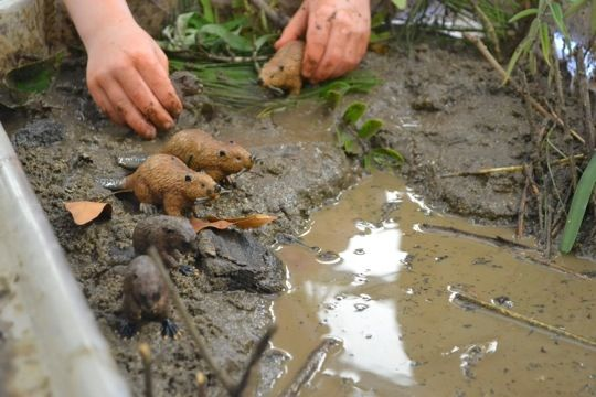 Create a beaver habitat in a water table for sensory and dramatic play.