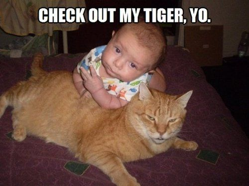 Check out my tiger, yo