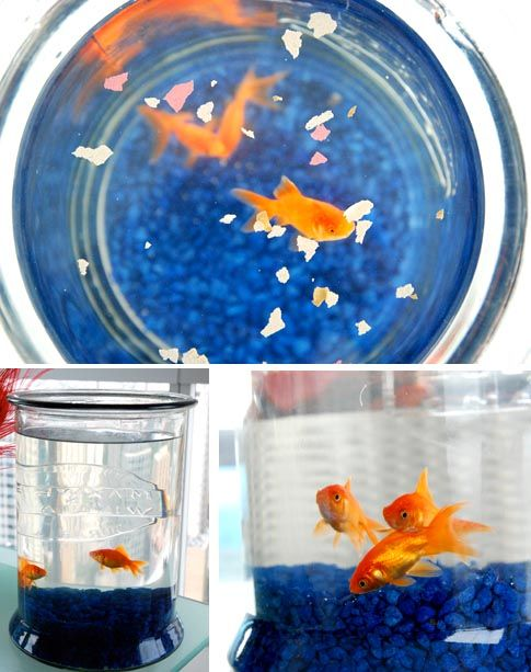 Go fish feng shui tips that 39 s smart pinterest for Travel fish tank