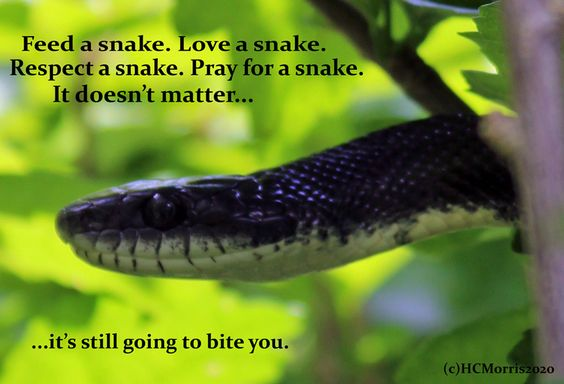 a black snake with snake quote