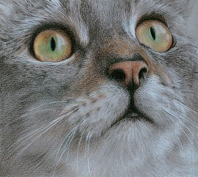 Tabby, drawn in coloured pencil From Artist, Katrina Ann. Incredible eyes!