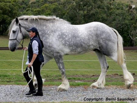 Shire Horse...i want one