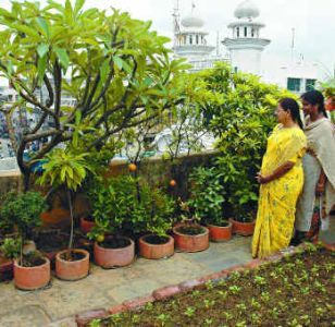 Terrace Garden Ideas Bangalore the hindu : property plus bangalore : organic farming on the