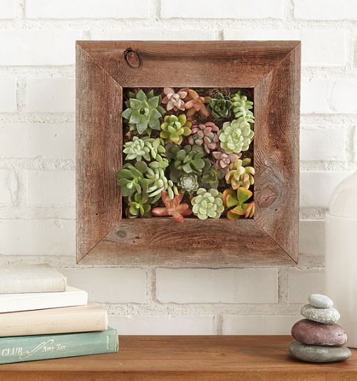 succulent living wall planter