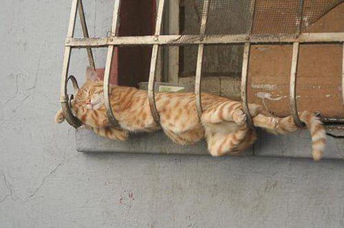 47 Adorable Cats Sleeping In Awkward Positions Cat Sleeping