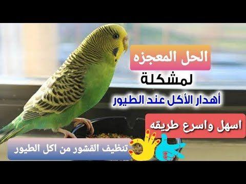 وداعا لمشكله اهدار اكل الطيور وفر فلوسك الحل الاسرع لتظيف اكل الطيور من القشور Youtube Animals Birds Bird