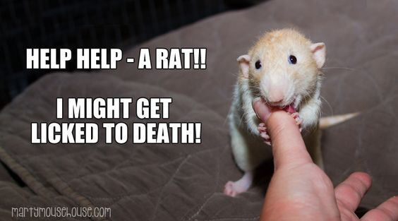 Rats are very scary.   www.martymousehouse.com