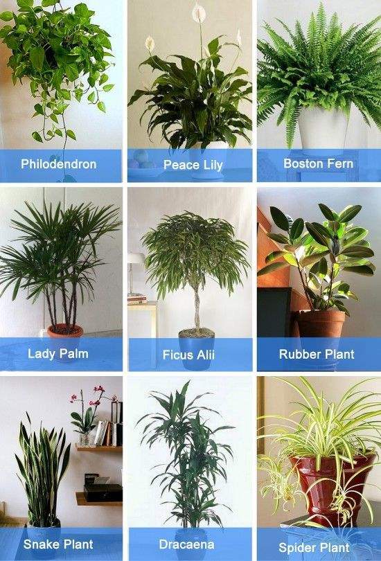 Air Purifying Plants For Bedroom: Garden Guide: Air Purification With Indoor Plants