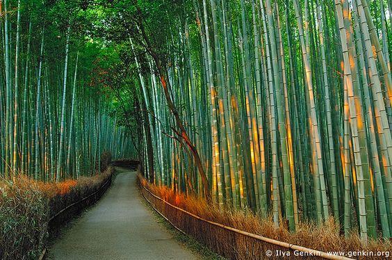 First Light at Sagano Bamboo Grove, Arashiyama, Kyoto, Japan / Ilya Genkin, via Flickr