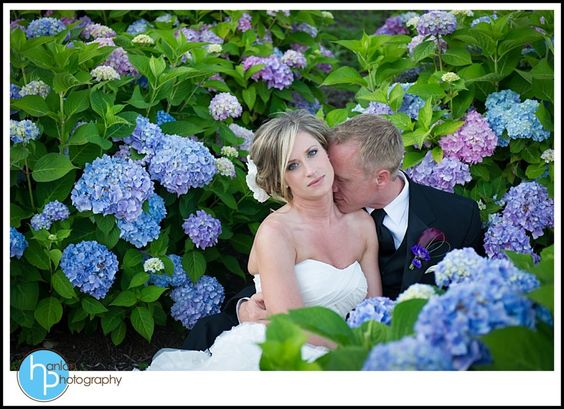 The hydrangea's in full bloom for Ashley & Chip's June 2012 Wedding  Photo by Hanlon Photography  www.hanlonphotography.com